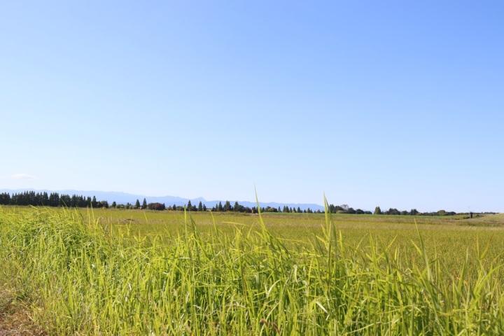 rice fields japan